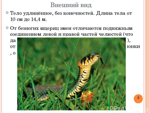 Внешний вид Тело удлинённое, без конечностей. Длина тела от 10см до 14,4м. От безногих ящериц змеи отличаются подвижным соединением левой и правой частей челюстей (что даёт возможность заглатывать добычу целиком), отсутствием подвижных век ибараб…