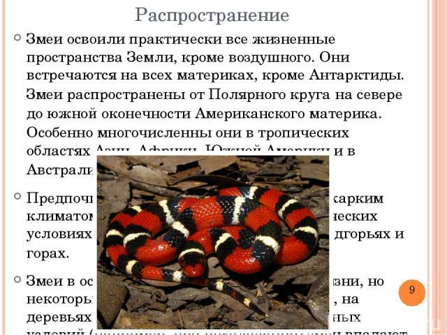 Распространение Змеи освоили практически все жизненные пространства Земли, кроме воздушного. Они встречаются на всехматериках, кромеАнтарктиды. Змеи распространены отПолярного кругана севере до южной оконечностиАмериканскогоматерика. Особенно …