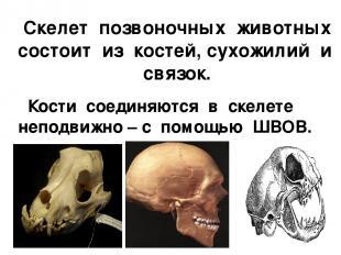 Скелет позвоночных животных состоит из костей, сухожилий и связок. Кости соединя