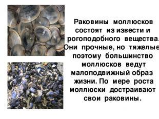 Раковины моллюсков состоят из извести и рогоподобного вещества. Они прочные, но