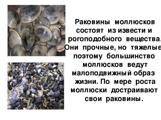 Раковины моллюсков состоят из извести и рогоподобного вещества. Они прочные, но тяжелые, поэтому большинство моллюсков ведут малоподвижный образ жизни. По мере роста моллюски достраивают свои раковины.