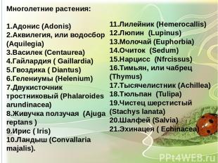 Многолетние растения: 1.Адонис (Adonis) 2.Аквилегия, или водосбор (Aquilegia) 3.