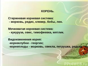 КОРЕНЬ. Стержневая корневая система: - морковь, редис, клевер, бобы, лен. Мочков