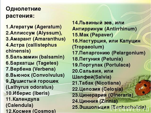 Однолетние растения: 1.Агератум (Ageratum) 2.Аллиссум (Alyssum), 3.Амарант (Amaranthus) 4.Астра (сallistephus chinensis) 5.Бальзамин (balsamin) 6.Бархатцы (Tagetes) 7.Вербена (Verbena) 8.Вьюнок (Convolvulus) 9.Душистый горошек (Lathyrus odoratus) 10…