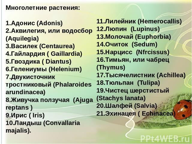 Многолетние растения: 1.Адонис (Adonis) 2.Аквилегия, или водосбор (Aquilegia) 3.Василек (Centaurea) 4.Гайлардия ( Gaillardia) 5.Гвоздика ( Diantus) 6.Гелениумы (Helenium) 7.Двукисточник тростниковый (Phalaroides arundinacea) 8.Живучка ползучая (Ajug…