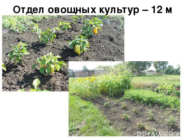 Отдел овощных культур – 12 м кв.