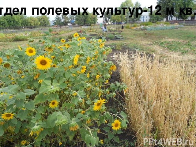 Отдел полевых культур-12 м кв.