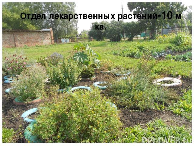 Отдел лекарственных растений-10 м кв.