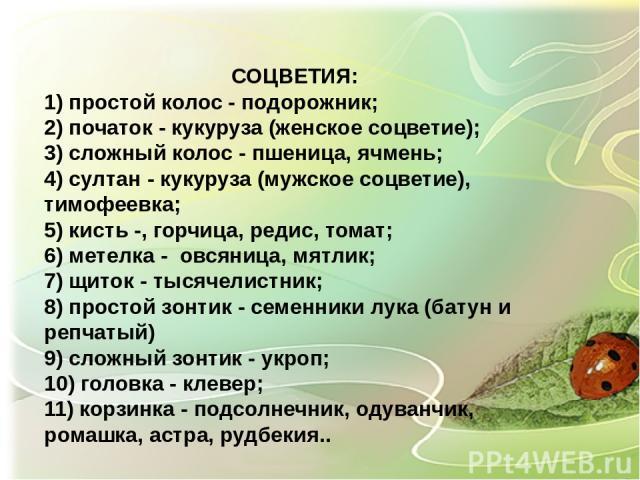 СОЦВЕТИЯ: 1) простой колос - подорожник; 2) початок - кукуруза (женское соцветие); 3) сложный колос - пшеница, ячмень; 4) султан - кукуруза (мужское соцветие), тимофеевка; 5) кисть -, горчица, редис, томат; 6) метелка - овсяница, мятлик; 7) щиток - …
