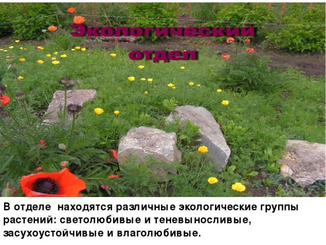 В отделе находятся различные экологические группы растений: светолюбивые и теневыносливые, засухоустойчивые и влаголюбивые.