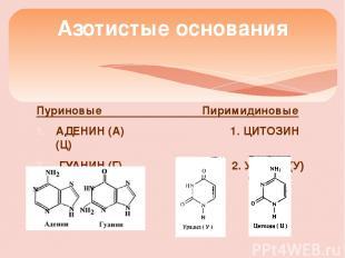 Пуриновые Пиримидиновые АДЕНИН (А) 1. ЦИТОЗИН (Ц) ГУАНИН (Г) 2. Урацил (У) Азоти