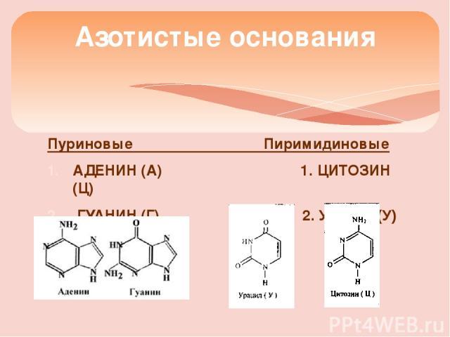 Пуриновые Пиримидиновые АДЕНИН (А) 1. ЦИТОЗИН (Ц) ГУАНИН (Г) 2. Урацил (У) Азотистые основания