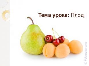 Тема урока: Плод