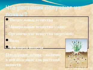 Что растения получают из почвы? Питательные вещества Минеральные вещества (соли)