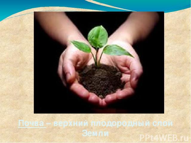 Почва – верхний плодородный слой Земли