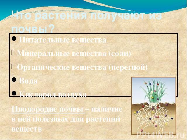 Что растения получают из почвы? Питательные вещества Минеральные вещества (соли) Органические вещества (перегной) Вода Кислород воздуха Плодородие почвы – наличие в ней полезных для растений веществ