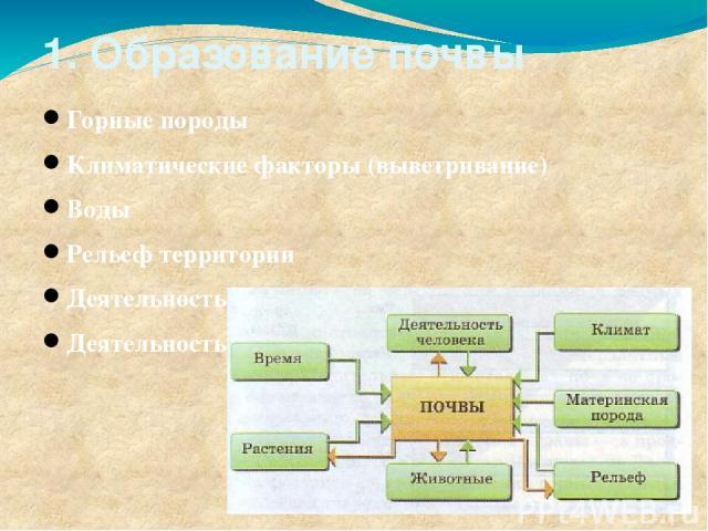 1. Образование почвы Горные породы Климатические факторы (выветривание) Воды Рельеф территории Деятельность растений и животных Деятельность человека