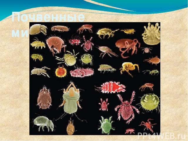 Почвенные микроорганизмы