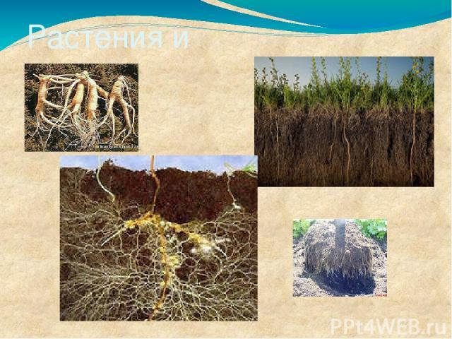 Растения и почва