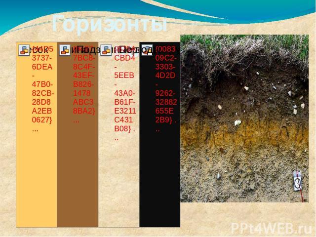 Горизонты почвы