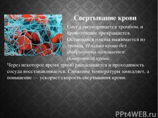 Свертывание крови Через некоторое время тромб рассасывается и проходимость сосуд