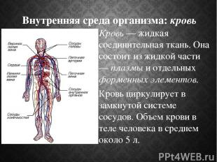 Внутренняя среда организма: кровь Кровь — жидкая соединительная ткань. Она состо