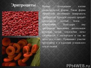 Эритроциты Мелкие безъядерные клетки двояковогнутой формы. Такая форма значитель