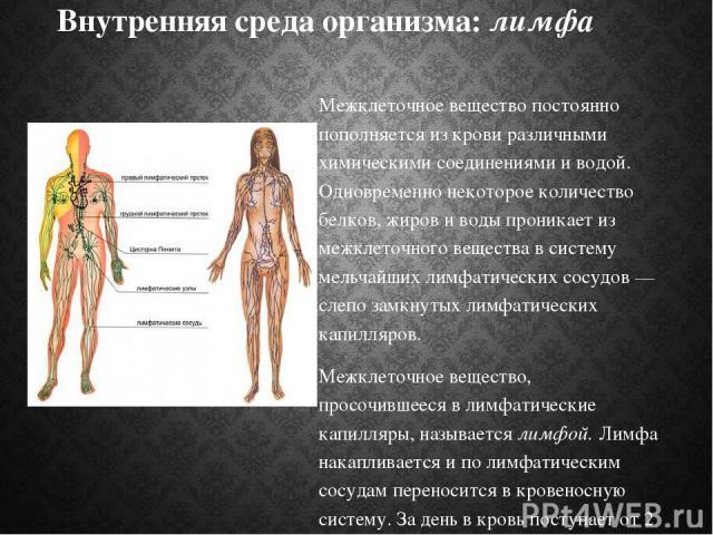 Внутренняя среда организма: лимфа Межклеточное вещество постоянно пополняется из крови различными химическими соединениями и водой. Одновременно некоторое количество белков, жиров и воды проникает из межклеточного вещества в систему мельчайших лимфа…