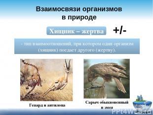 Взаимосвязи организмов в природе Хищник – жертва - тип взаимоотношений, при кото