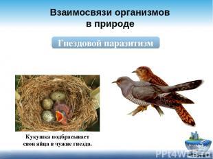 Взаимосвязи организмов в природе Гнездовой паразитизм Кукушка подбрасывает свои