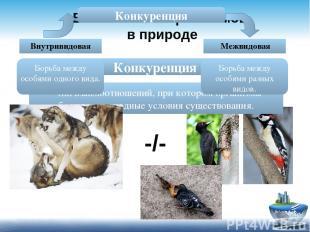 Взаимосвязи организмов в природе Конкуренция - тип взаимоотношений, при котором