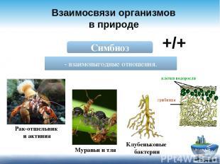 Взаимосвязи организмов в природе Симбиоз - взаимовыгодные отношения. +/+ Рак-отш