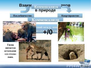 Взаимосвязи организмов в природе Комменсализм - тип взаимоотношений между животн