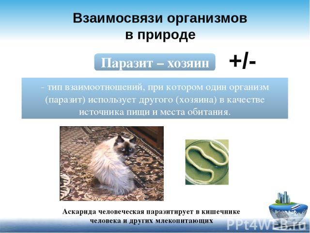 Взаимосвязи организмов в природе Паразит – хозяин - тип взаимоотношений, при котором один организм (паразит) использует другого (хозяина) в качестве источника пищи и места обитания. +/- Аскарида человеческая паразитирует в кишечнике человека и други…