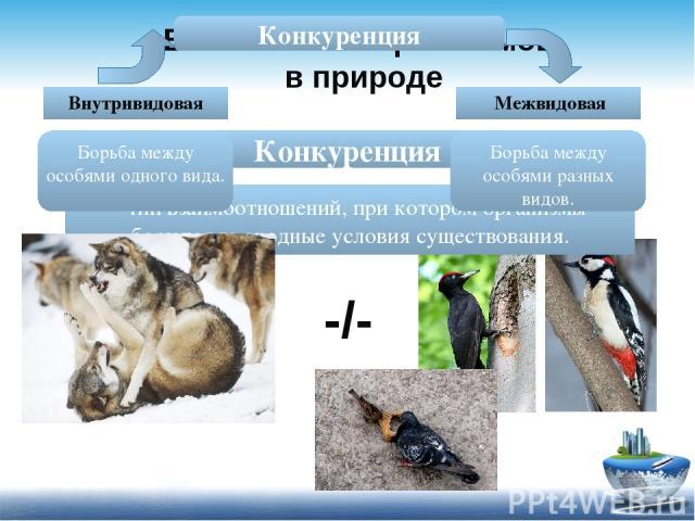 Взаимосвязи организмов в природе Конкуренция - тип взаимоотношений, при котором организмы борются за сходные условия существования. Конкуренция Борьба между особями одного вида. Борьба между особями разных видов. Внутривидовая Межвидовая -/-