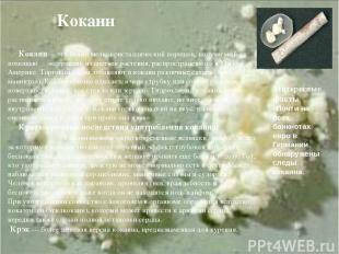 Кокаин Кокаин— это белый мелкокристаллический порошок, получаемый с помощью экст