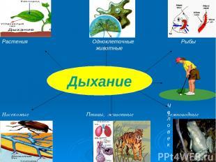 Растения Одноклеточные Рыбы животные Человек Насекомые Птицы, животные Земноводн
