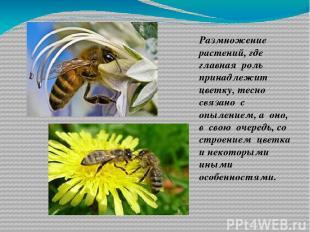 Размножение растений, где главная роль принадлежит цветку, тесно связано с опыле