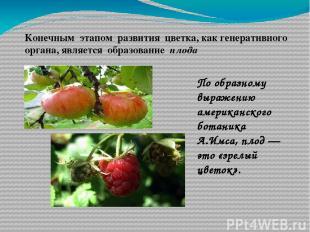 Конечным этапом развития цветка, как генеративного органа, является образование
