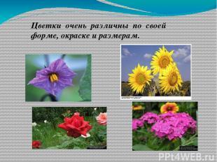Цветки очень различны по своей форме, окраске и размерам.