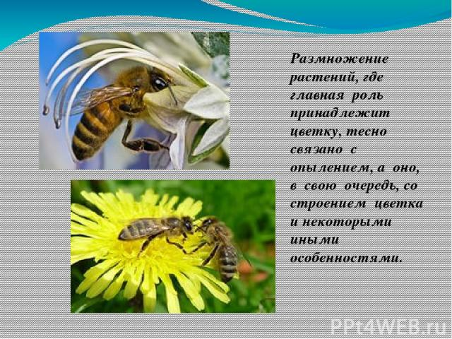 Размножение растений, где главная роль принадлежит цветку, тесно связано с опылением, а оно, в свою очередь, со строением цветка и некоторыми иными особенностями.