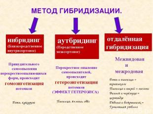 МЕТОД ГИБРИДИЗАЦИИ. инбридинг (Близкородственное внутрисортовое) аутбридинг (Нер