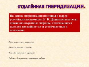 На основе гибридизации пшеницы и пырея российским академиком Н. В. Цициным получ