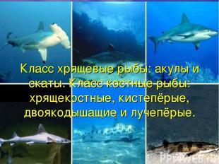 Класс хрящевые рыбы: акулы и скаты. Класс костные рыбы: хрящекостные, кистепёрые