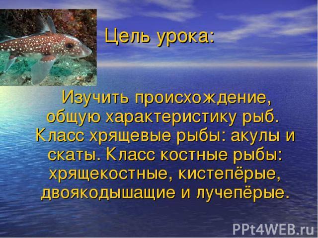 Цель урока: Изучить происхождение, общую характеристику рыб. Класс хрящевые рыбы: акулы и скаты. Класс костные рыбы: хрящекостные, кистепёрые, двоякодышащие и лучепёрые.