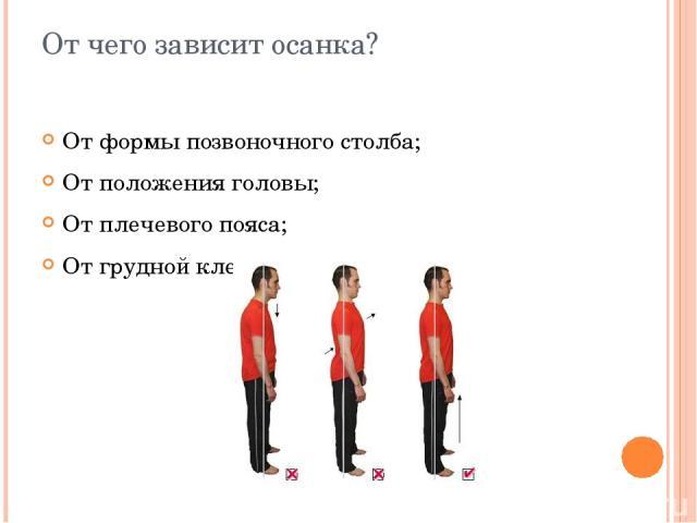От чего зависит осанка? От формы позвоночного столба; От положения головы; От плечевого пояса; От грудной клетки.