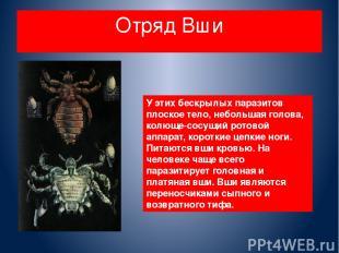 Отряд Вши У этих бескрылых паразитов плоское тело, небольшая голова, колюще-сосу