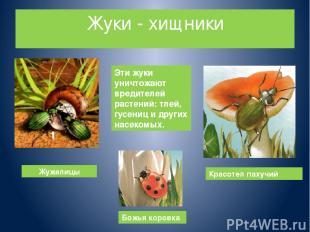 Жуки - хищники Жужелицы Божья коровка Красотел пахучий Эти жуки уничтожают вреди