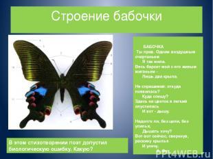 Строение бабочки БАБОЧКА Ты прав. Одним воздушным очертаньем Я так мила. Весь ба