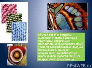 Крылья бабочек покрыты видоизменёнными волосками-чешуйками, способными преломлят